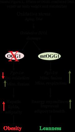 Model-Figure-1